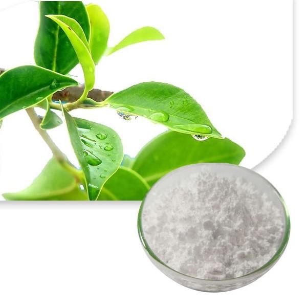 茶氨酸 Featured Image
